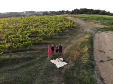 Dégustation dans les vignes