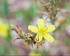 Une jolie fleur jaune