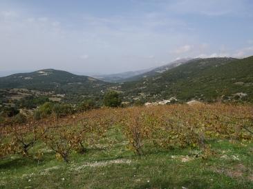 Le vignoble du Mont Aenos