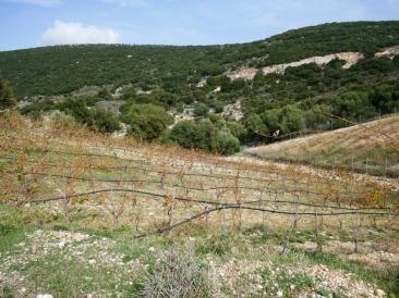 Le vignoble au pied du Mont Aenos
